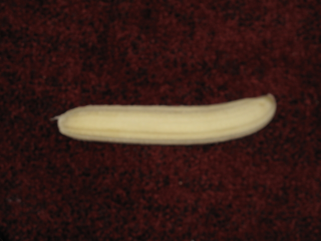 Accretionary Wedge 19 Yes We Have A Banana Hypo Theses