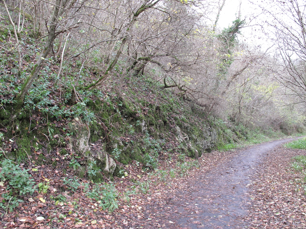 Milldale Limestone section before geoconservation